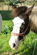 horseback-riding